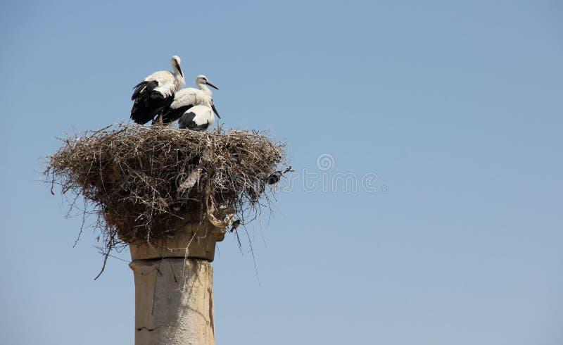 White Stork Nest royalty free stock photography
