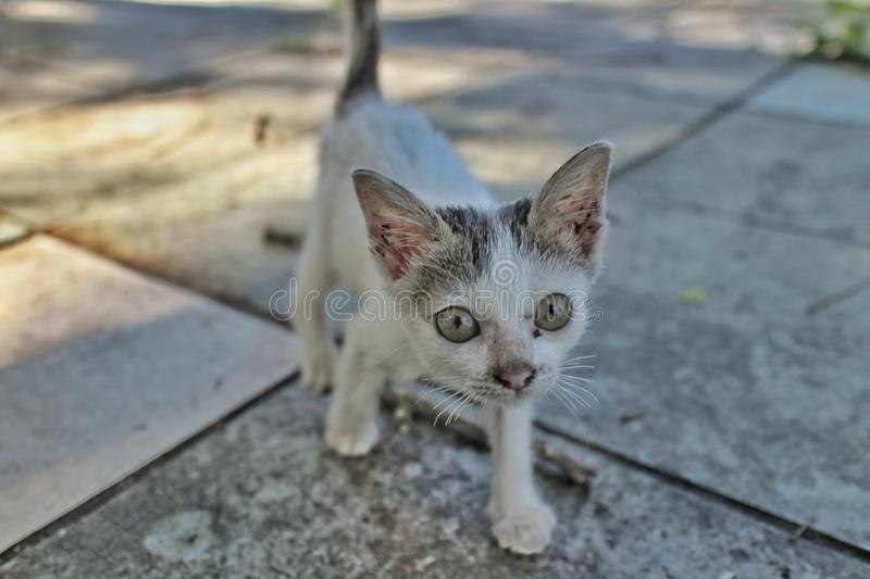 WHITE STRAY KITTEN in the shade on walkway. White stray kitten in shade stock photos
