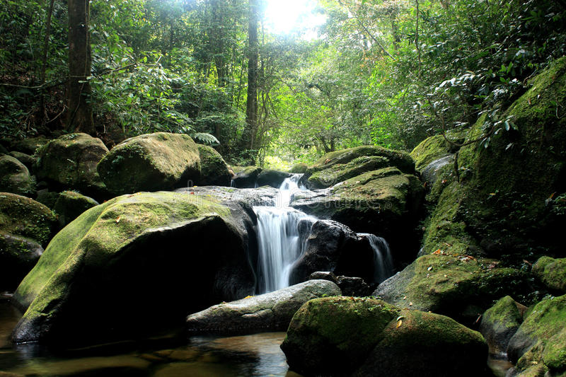 White stream waterfall in dark forest with moss royalty free stock photos