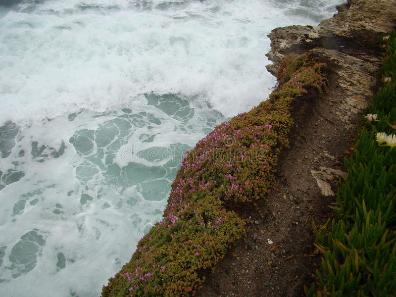 White surf with pink ice plant rocky cliff. Pathway lined by pink ice plant and white foam over green ocean royalty free stock photography
