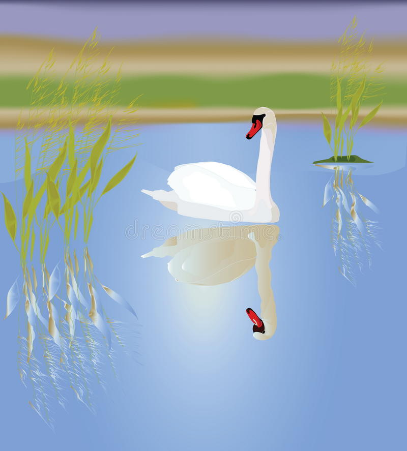 Download A White Swan Stock Photo - Image: 23311220