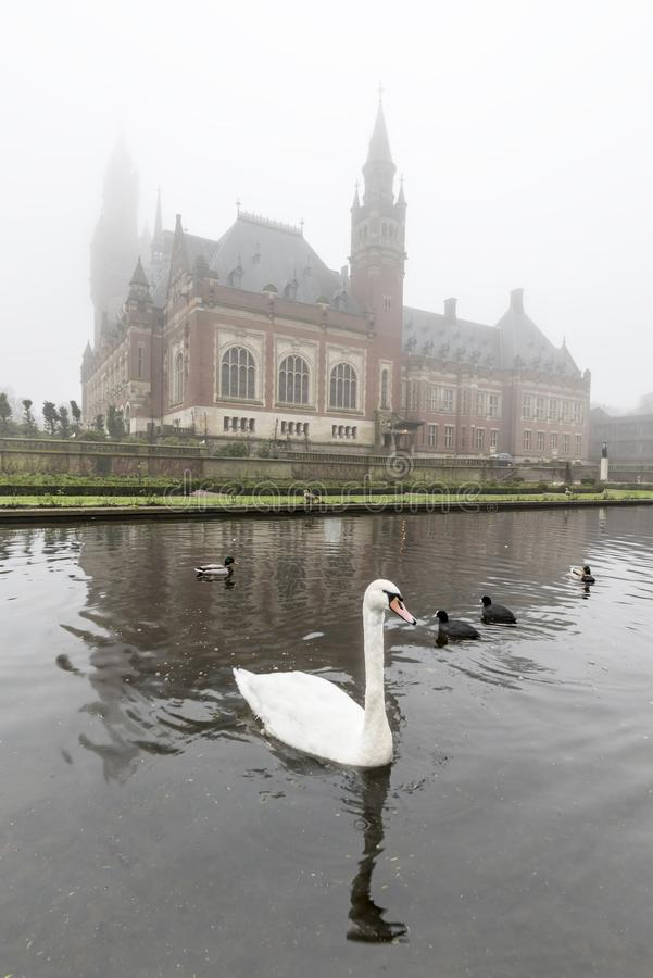 White swan on the Peace Palace pond, Vredespaleis, under the mist stock photos