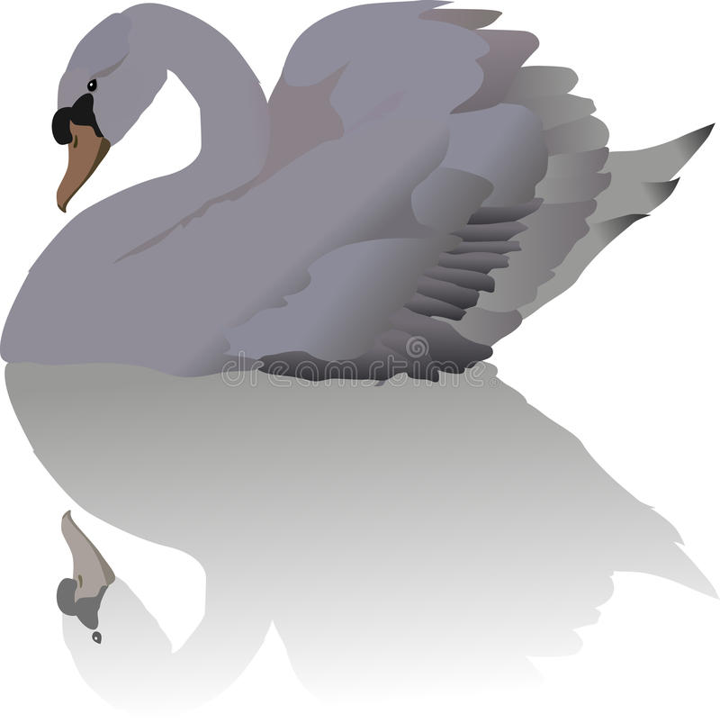 Download White swan and reflection stock vector. Image of wing - 9430463