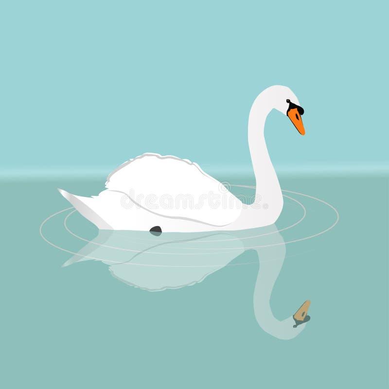 Mute swan stock illustration