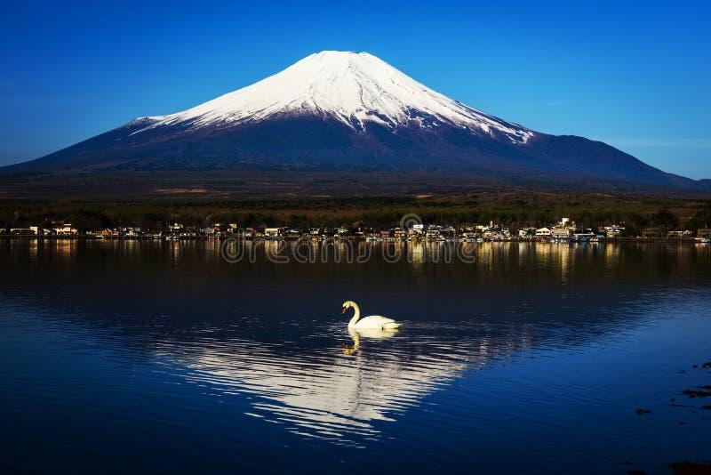White Swan on Yamanaka lake royalty free stock images
