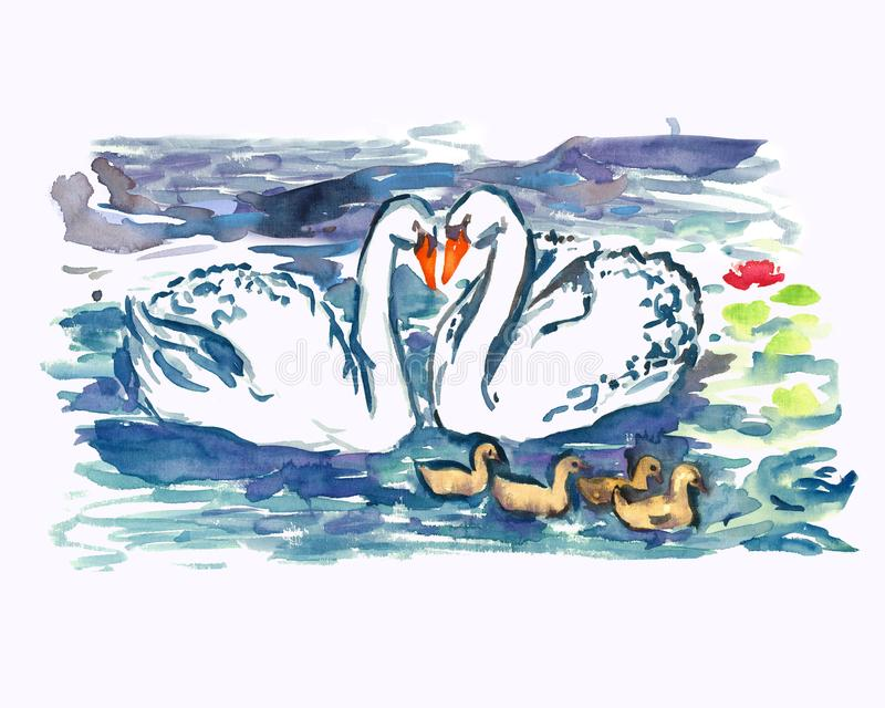 White swans couple with nestlings swimming together on pond stock illustration