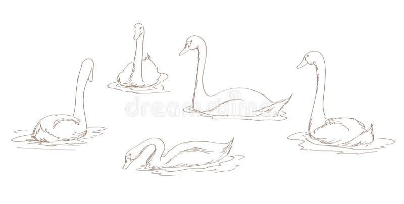 White swans set vector illustration