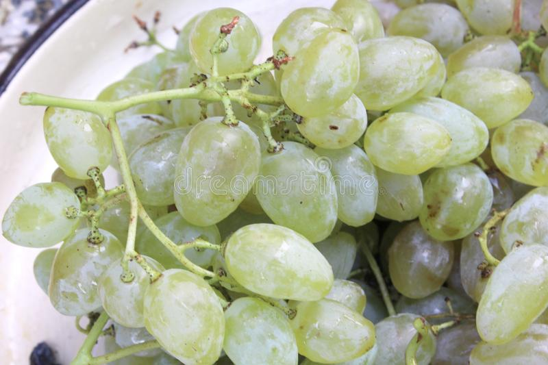white sweet grape for eating and dessert royalty free stock image