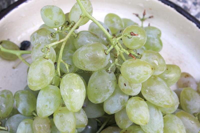 white sweet grape for wine in plate royalty free stock photography