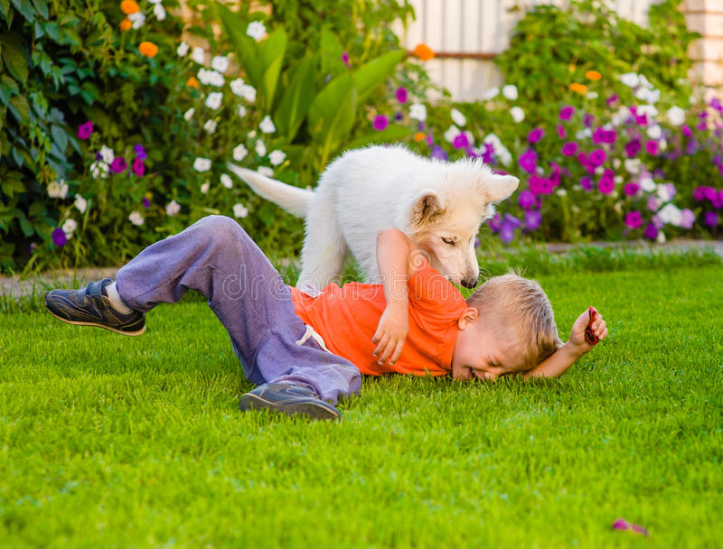 White Swiss Shepherd`s puppy and kid playing together on green g royalty free stock image