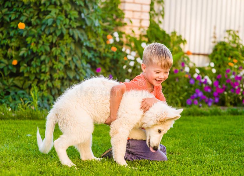 White Swiss Shepherd`s puppy and kid playing together on green g. Rass royalty free stock image