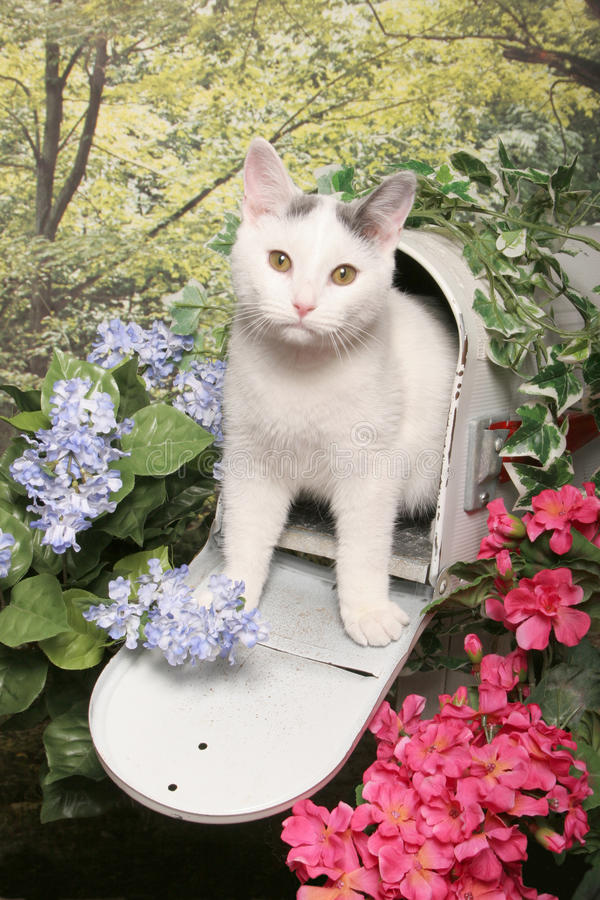 White Tabby Cat in A Mailbox. A white tabby kitten steps out of a white mailbox surrounded by flowers and woods royalty free stock image