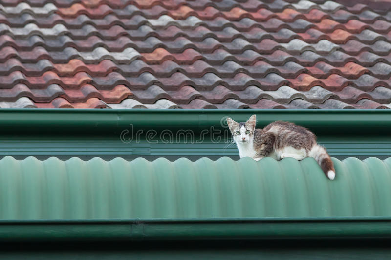 Stray Cat on a Roof. White and tabby stray cat sitting on a green and tile roof royalty free stock photo