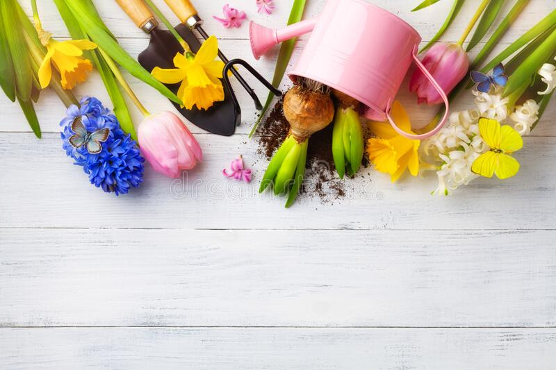 White table with gardening tools, seedling of flowers and butterflies top view. Beautiful nature spring background royalty free stock photo