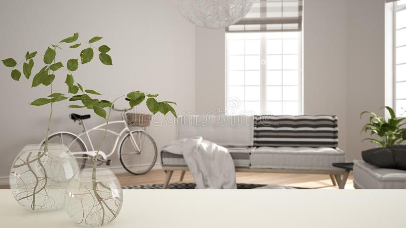 White table top or shelf with glass vase with hydroponic plant, ornament, root of plant in water, branch in vase, house plant,. Modern blurred living room royalty free stock photography