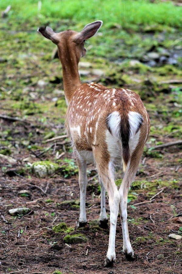 Parc Park Safari, Hemmingford, Quebec, Canada stock photography