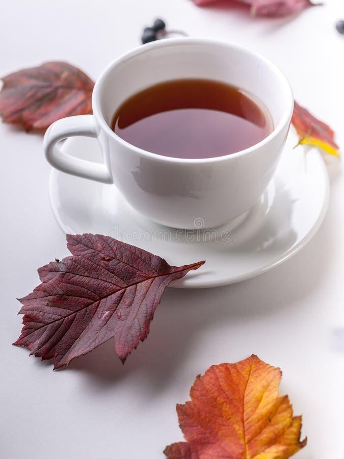 White Tea Mug and leaves close-up. Autumn composition. Red foliage, ceramic teacup and small fruits on white background. Fall. Season creative botanical stock photo