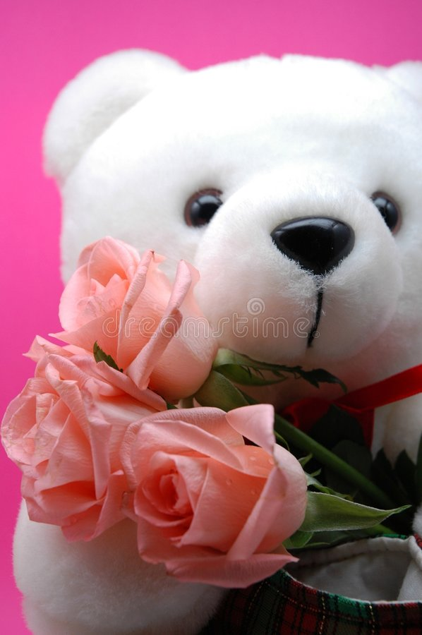 White Teddy Bear and pink roses stock images
