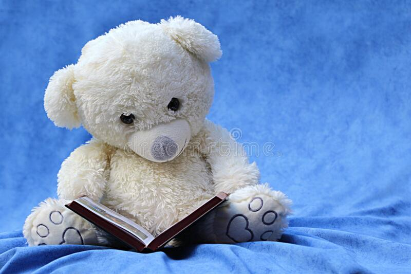 White Teddy Bear Reading Book royalty free stock photo