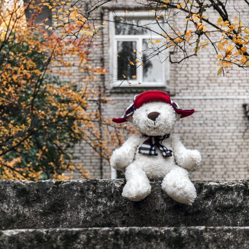 A white teddy bear in a red hat and scarf sits on a stone staircase against the background of a white brick house and smiles. A white teddy bear in a red hat stock images