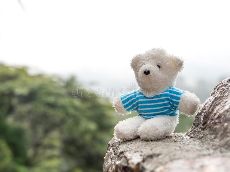 White teddy bear on stone The background is a forest and mountains. copy space for text. Valentines day, love concept and love royalty free stock photos