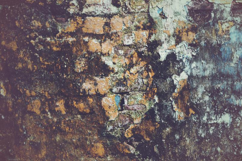 Old, decayed wall with peeling plaster. White, Textured, Whitewashed Red Brick Wall With Damage And Blue Blob. Old Grunge Mold Building. Stucco And Plaster royalty free stock photos