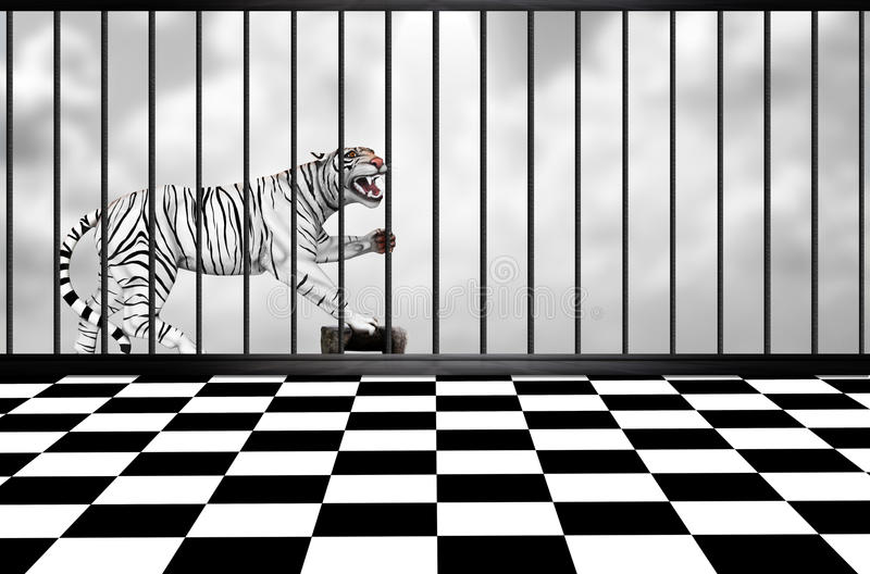 White tiger. A white tiger in a cage with a black and white checkered floor in the foreground and a grey cloudy sky in the background vector illustration