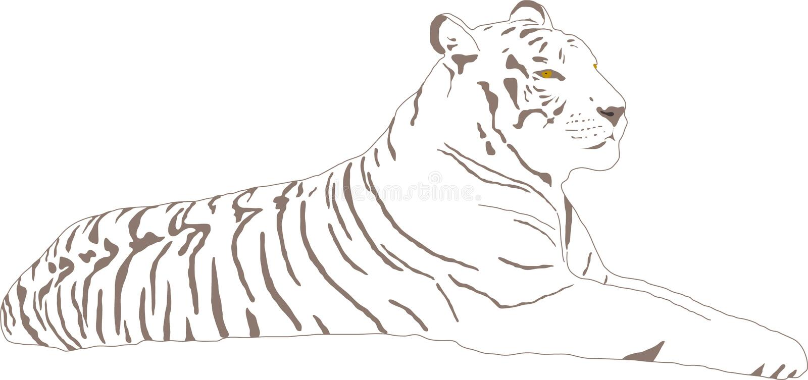 White tiger. Lying White tiger with stripes vector illustration