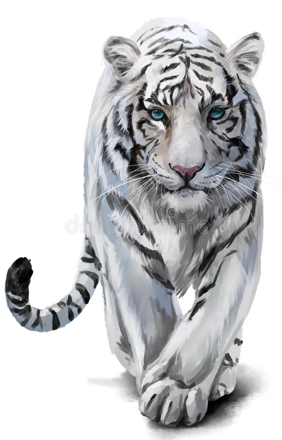 White tiger watercolor painting. White tiger sneaks watercolor painting stock illustration