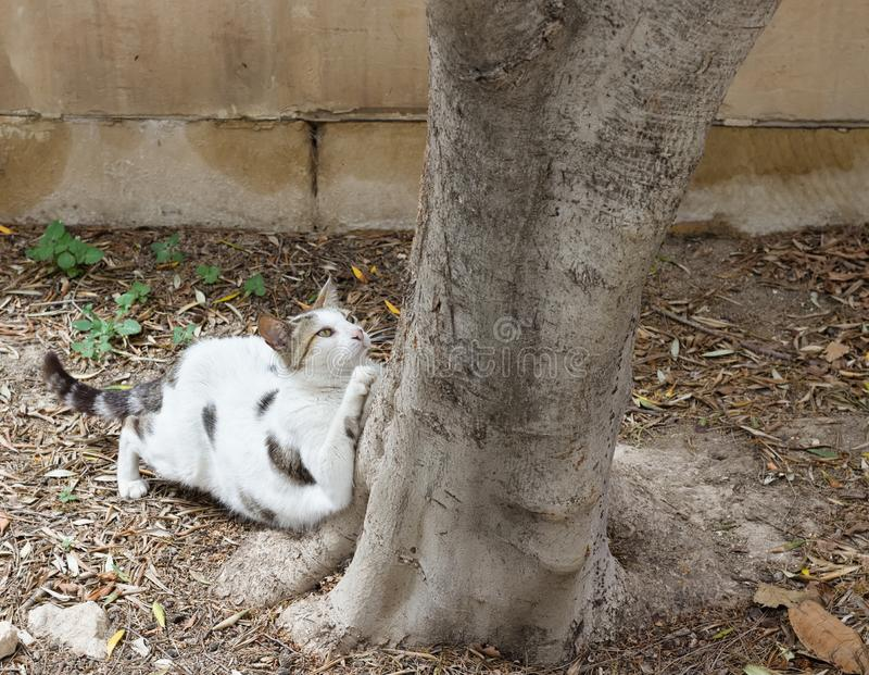 White tigered stray cat stretching at foot of tree. royalty free stock photography