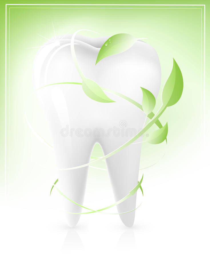 Download White Tooth With Green Leaves-arrows. Stock Vector - Illustration: 14052266