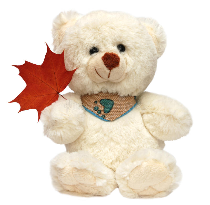 White toy bear isolated stock photos