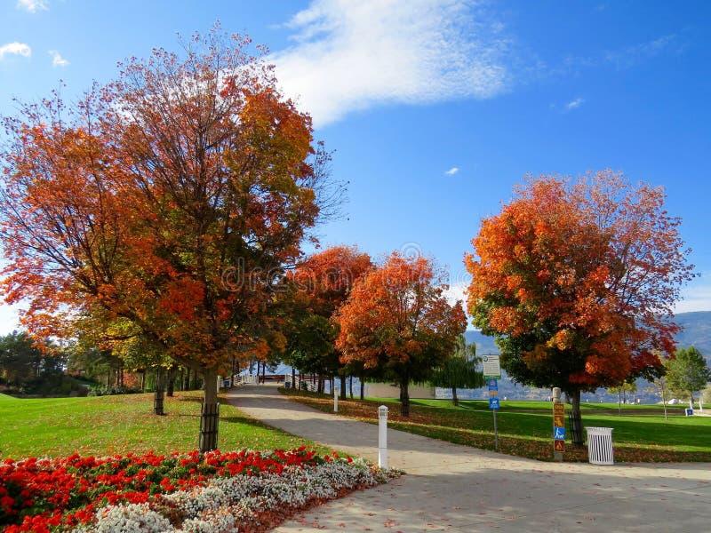 White Trash Bin Under Red Leaves Tree Free Public Domain Cc0 Image