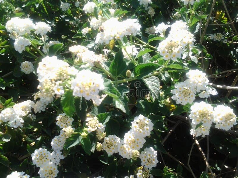White tree flowers spring beautiful sunshades garden design royalty free stock images