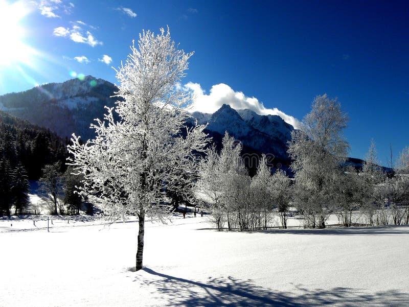 White Tree and Mountain View stock photos