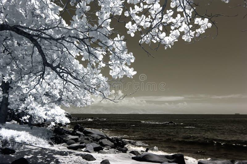 White Tree Beside Seashore Photo stock image
