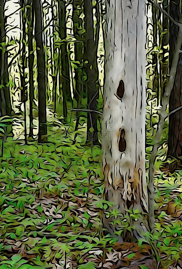 Woodpecker`s Tree in forest stock images