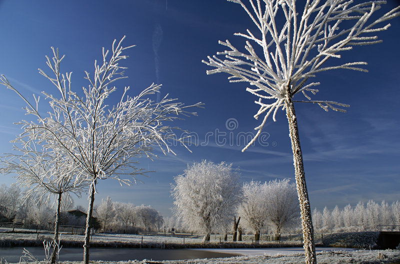White trees with a blue sky stock images