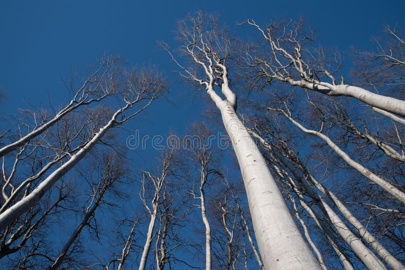 White tree silhouettes pointing to blue heaven stock photos