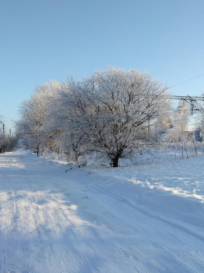 White trees in the Ukraine royalty free stock image