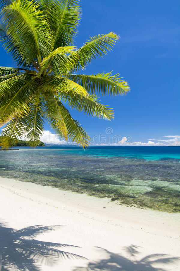 Download White tropical beach stock image. Image of palm, leisure - 37983183