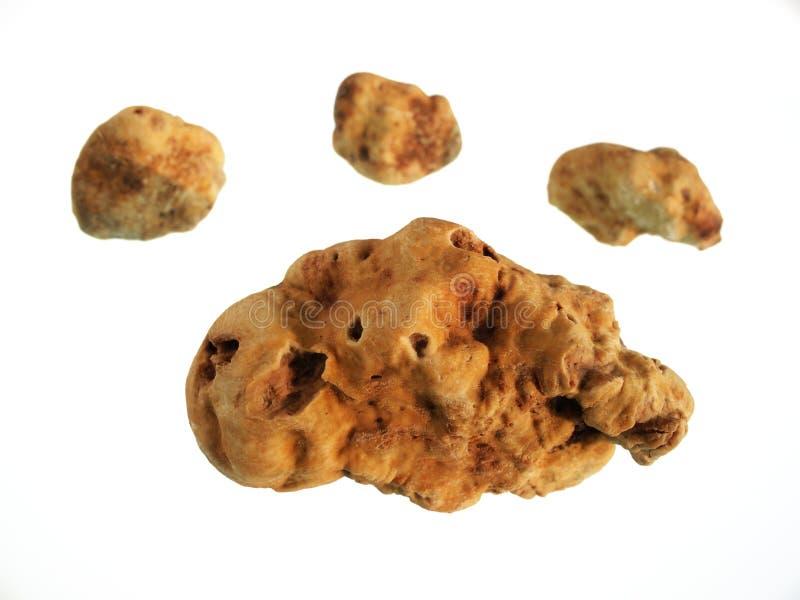 Download White truffles stock photo. Image of winter, spice, macro - 23426266