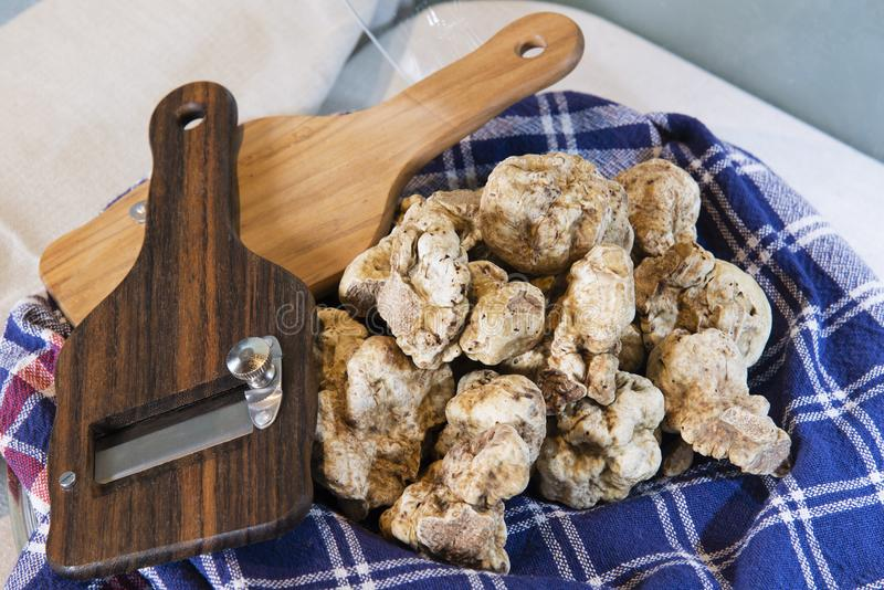White truffles on cloth with truffle cut in wood. White truffles on the typical cloth trunk, with truffle cut in wood, from the Langhe Alba in Piedmont Italy royalty free stock photo