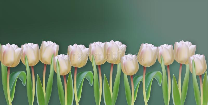 White tulip flowers Vector realistic banner. Spring season template 3d illustrations royalty free illustration