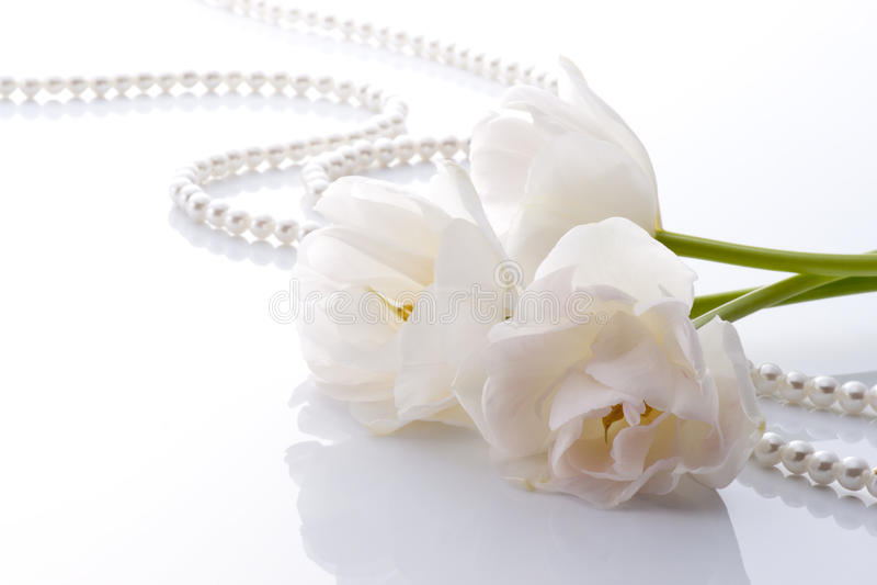 Download White tulips stock photo. Image of tulip, tasteful, elegant - 26096470