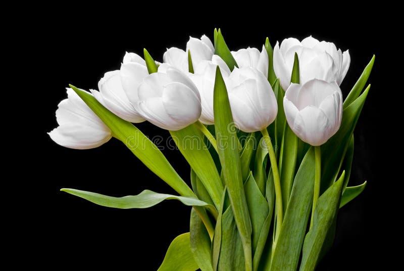 White tulips on black royalty free stock photos
