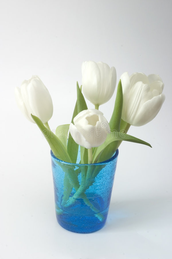 Download White Tulips in Blue Glass stock photo. Image of flowers - 525992