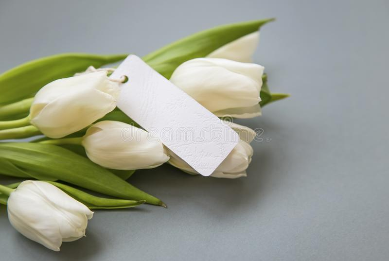 White tulips bouquet with blank label card , women`s day greeting card copy space royalty free stock photo