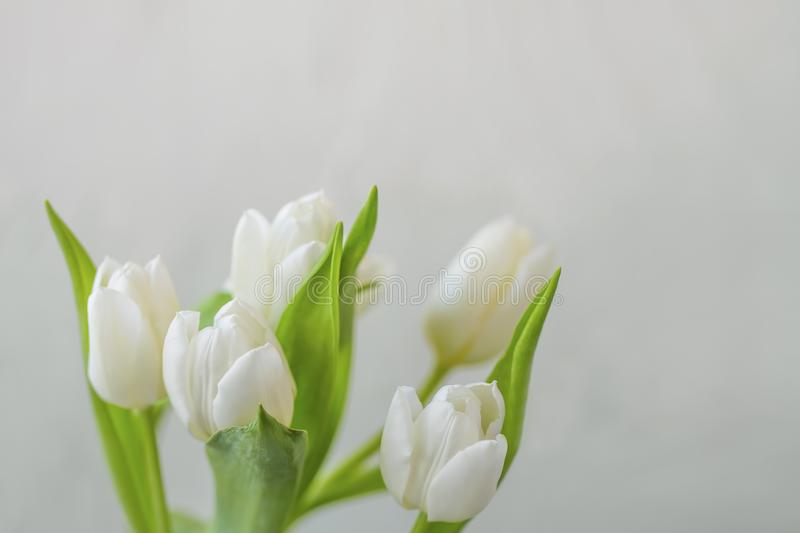White tulips bouquet with copy space, beautiful floral greeting sprintime mother`s day card stock photos