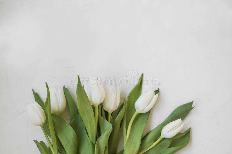 White tulips bouquet with copy space, top view spring mothers`s day greeting with flowers bouquet royalty free stock images